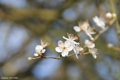 Fleurs, arbres, feuilles