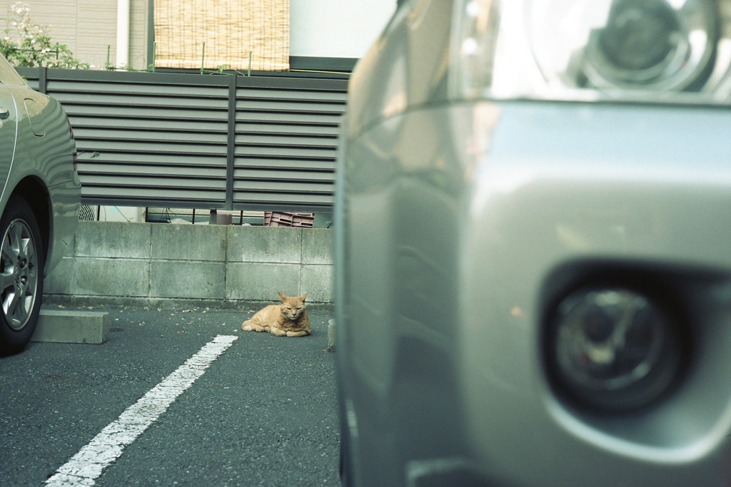 a cat in the parking