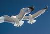 Bird Photography by Warren L. Brown Circa 1960s--70s