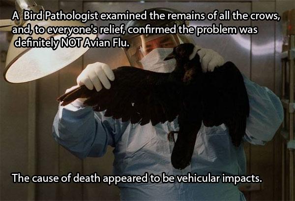 Paukščių patologai ištyrinėjo varnų lavonus ir visi su palengvėjimu suprato, jog tai tikrai ne kažkoks