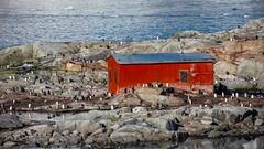 Penguin Colony @ Petermann Island, Antarctica