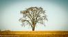 tree-3415