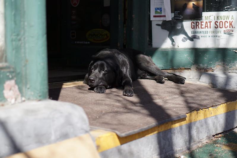 Beacon NY Dog