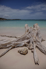 Beach stump Antigua
