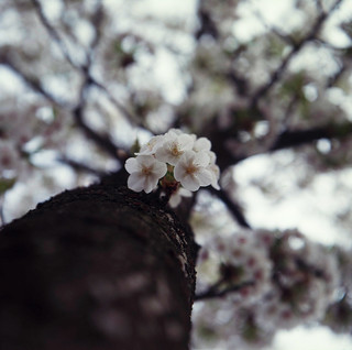 Flowers on the tree