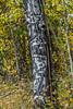 0841, Natural Totem_1426