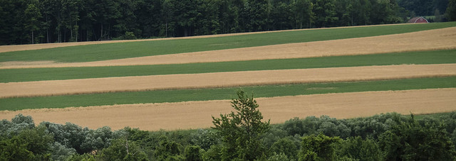 Wheat Field_7105398