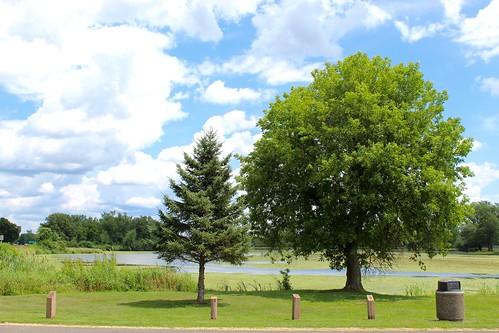 Little Tree / Big Tree