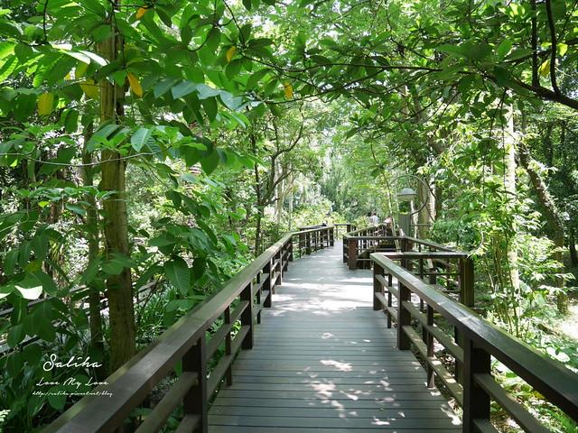 台北一日遊景點推薦植物園荷花蓮花池 (3)