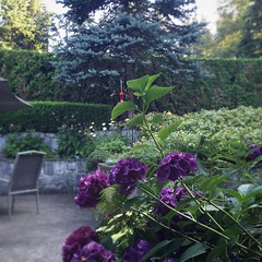 Good morning ☮:purple_heart::sun_with_face: