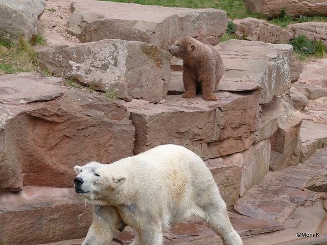43-das ist nicht mein Eisbärenkind