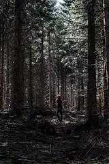 Au milieu des arbres - Photo of Saint-Priest-la-Prugne