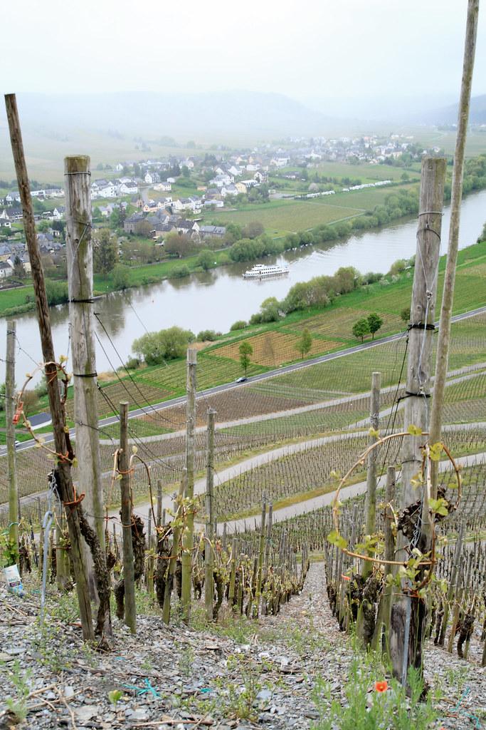 Rain on vineyards