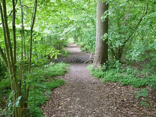 Bos van Marpingen mei 2015