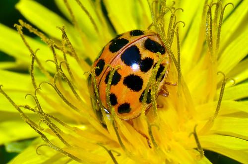 Lady Bug (Explored)