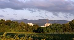 Weingarten in the evening sun