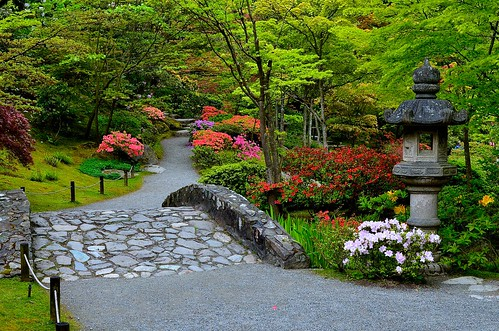 Azalea Time-Seattle Japanese Garden