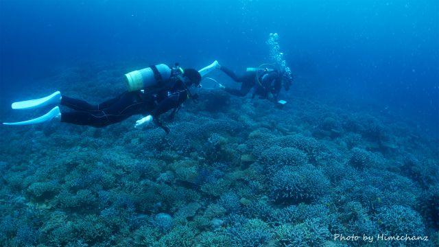サンゴキレイゾーンをゆっくり遊泳中♪