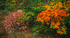 Colors of autumn_I