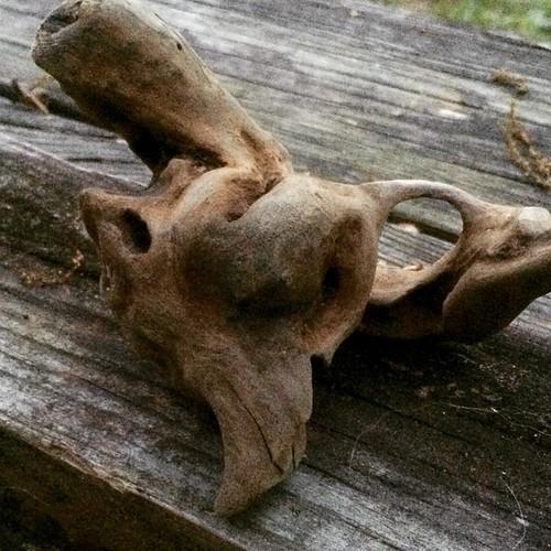 #pareidolia #driftwood
