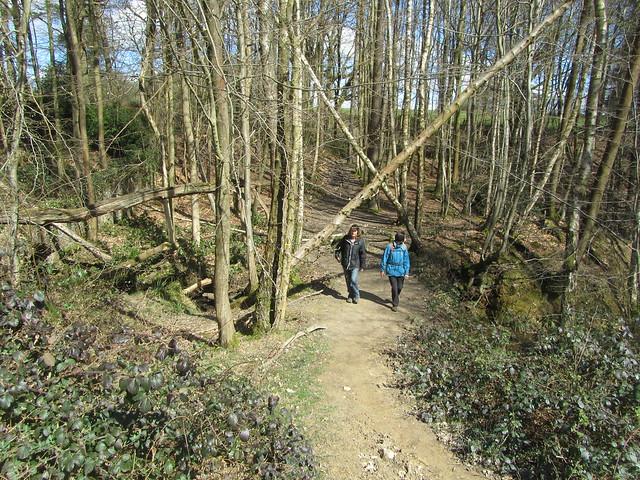 UK - East Sussex - Near Brightling - Walking through woods