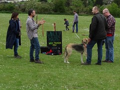 police dog(0.0), animal sports(1.0), animal(1.0), dog(1.0), pet(1.0), mammal(1.0), conformation show(1.0),