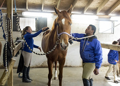 equestrian vaulting(0.0), equestrianism(1.0), mare(1.0), equestrian sport(1.0), pack animal(1.0), horse(1.0), horse harness(1.0), stable(1.0),