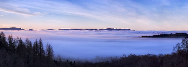 Mist on the Moss