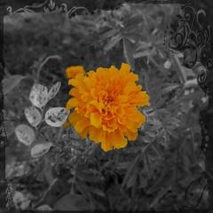 #flower #thatta #court