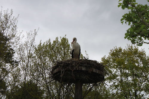 stork in nest high above ground
