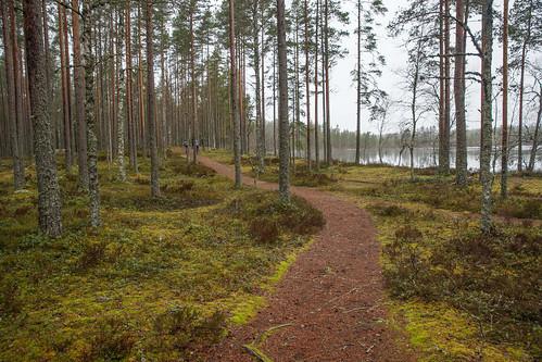 lake suomi nationalpark hike kansallispuisto järvi vaellus lauhanvuori