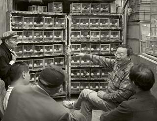 BirdMarket_Pigeons (花鸟市场)上海。