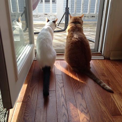 """""""OMG THE DOOR IS OPEN!"""" #cats #catsofinstagram #foodcatspens"""