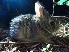 Baby Bunny #3