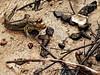 atlantic mudskippers by dotun55