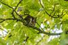 Autumnal Squirrels 2