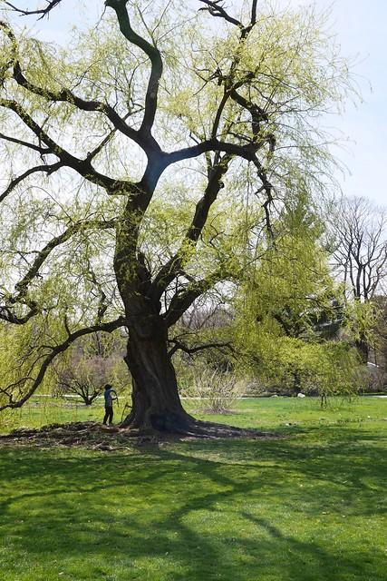 日, 2015-04-19 13:54 - Brooklyn Botanic Garden