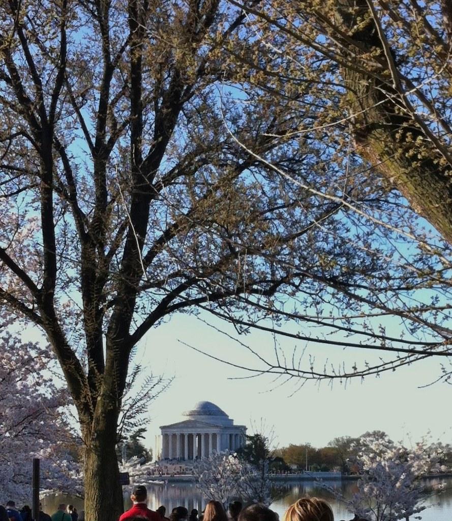 Jefferson Monument Cherry Blossoms