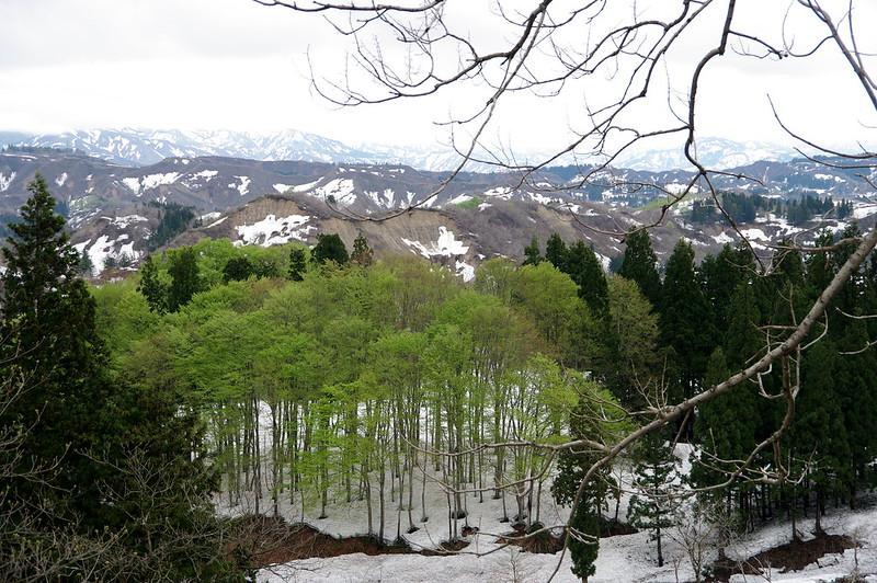 残雪と新緑_201504_NO1
