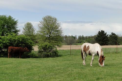horse field farm scenic missouri everton