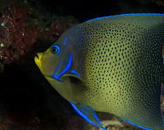 Suva Scuba Dive 24 May 2015