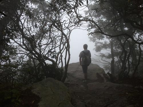 rock fog northcarolina hike gnarly blueridgemountains slab tangled mosescone