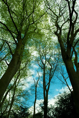 20150426-01_Cawston Bluebell Woods - Trees