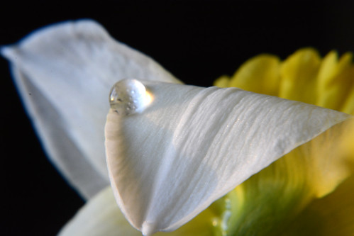 Droplets and daffodils