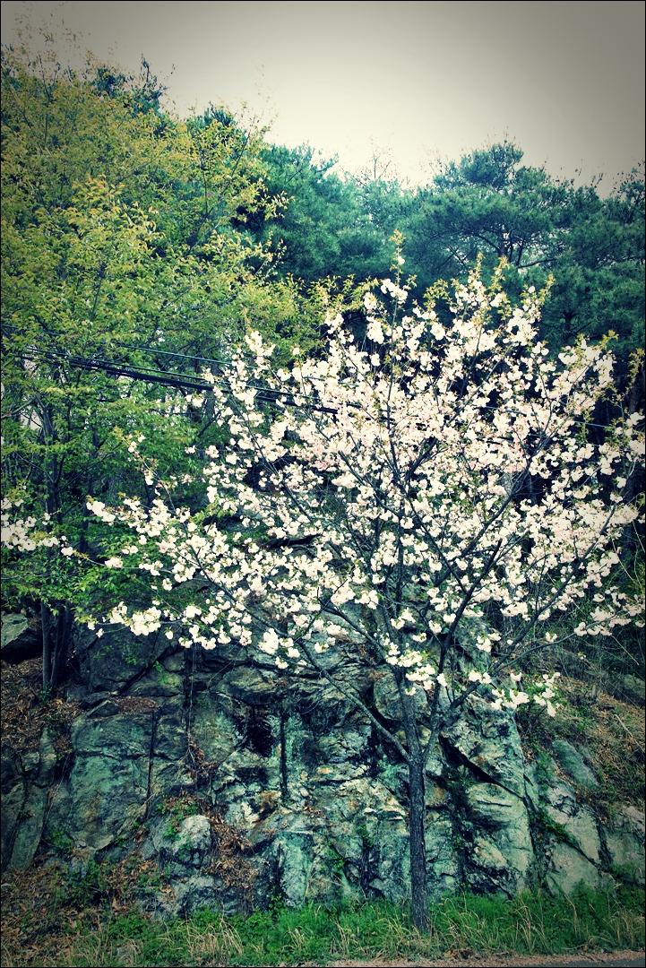 꽃 길-'섬진강 자전거 여행'