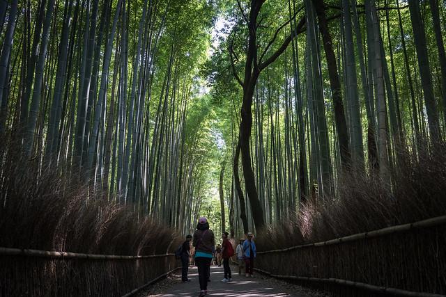 Sagano_BambooForest_05