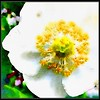 The #White #Flower