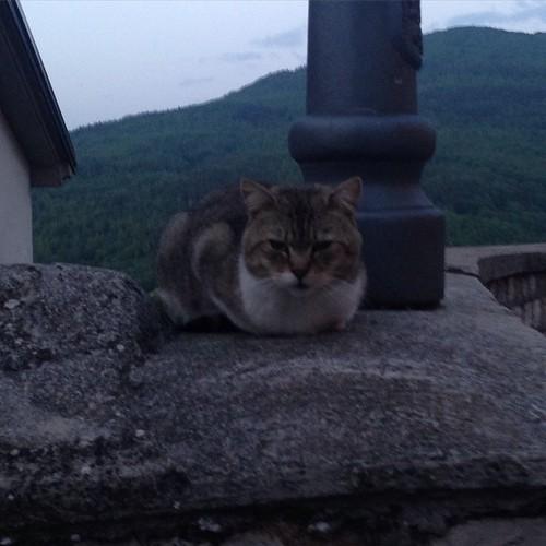 Gatto lucano 😀 #picoftheday #basilicata #basilicatacoasttocoast #pignola #cats #gatti
