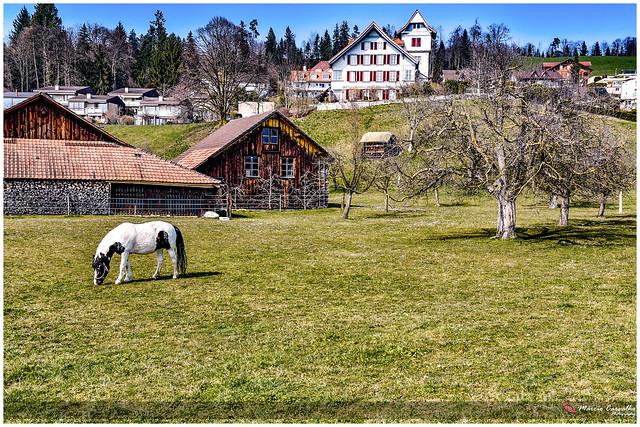 Spring day on winter - Steffisbourg_D755646