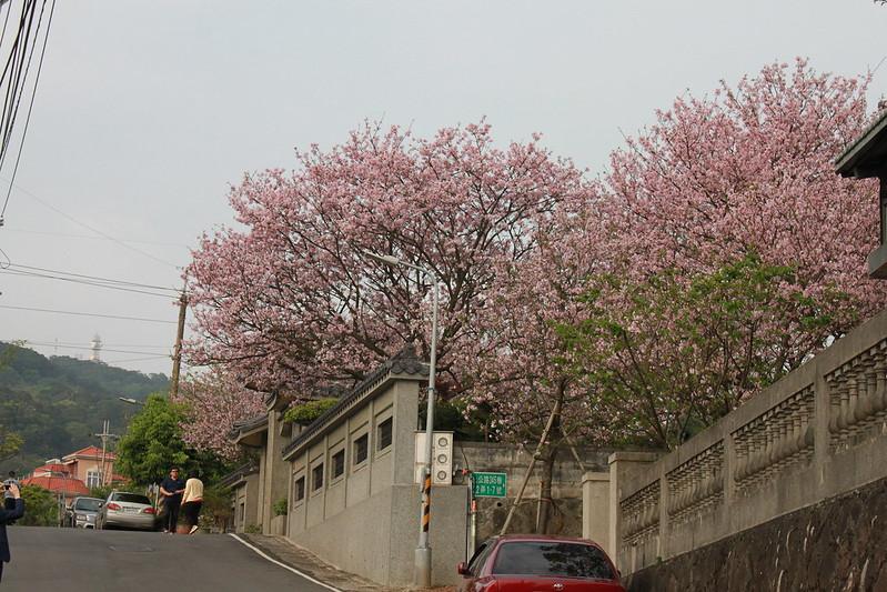 17度C在地景點春季推薦-東方室-櫻花 (30)